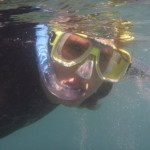 Snorkeling in the Whitsundays