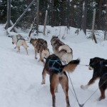 Dogsledding in a Winter Wonderland