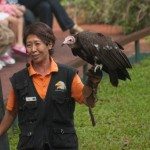 The Birds of Prey Show