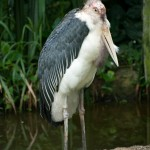 One of the ugliest birds I've never seen!