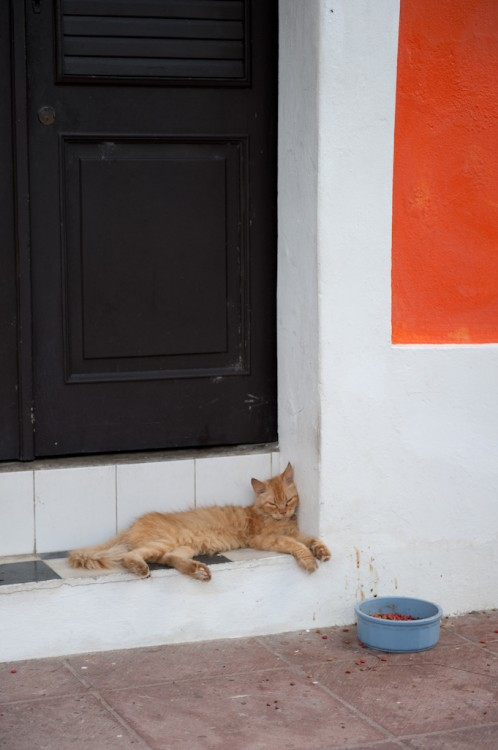 Catnapping in Old San Juan