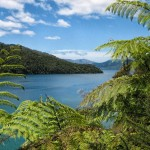 The Queen Charlotte Track: Ship Cove to Furneaux Lodge