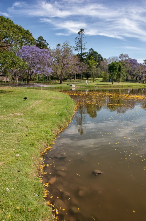 UQ Lakes in October