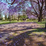 A Sea of Purple at UQ