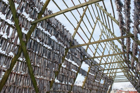 Stockfish Racks