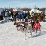 Reindeer Racing at the Sami Easter Festival