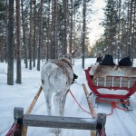 Officially Licensed to Drive a Reindeer Sled