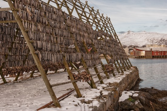 Wooden Rack of Stockfish