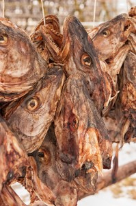 Drying Codfish Heads