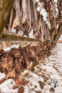 Drying Codfish