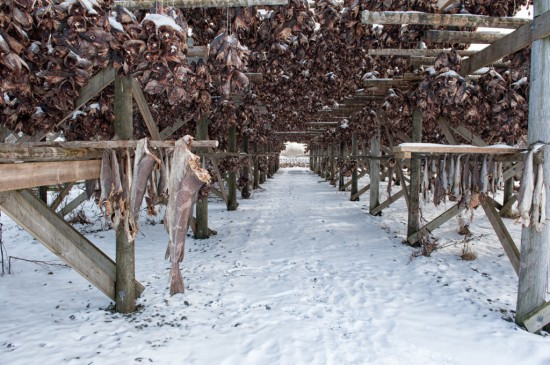 A Tunnel of Stockfish