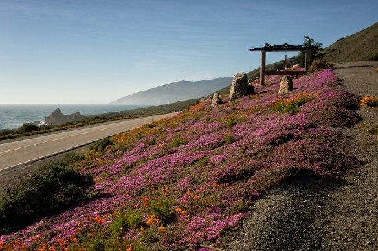 The Flowers of Big Sur
