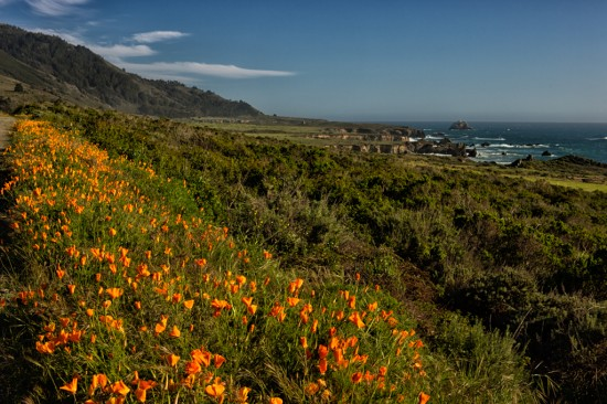 Wildflowers of Big Sur