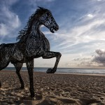 Seaside Artistry at the Swell Sculpture Festival