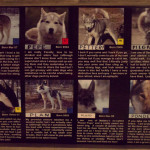 Meet the Huskies