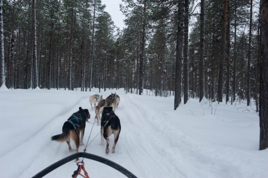 On the dogsled