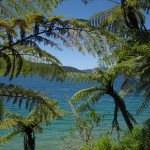 The Queen Charlotte Track: Endeavour Inlet to Camp Bay