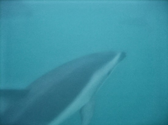 Underwater Closeup of a Dolphin #2