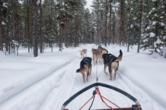 Dogsledding in Jokkmokk