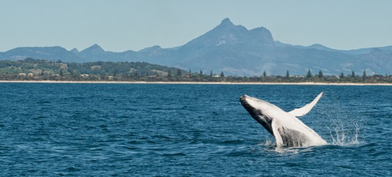 October 2012: Whale Watching in Coolangatta